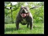 Vitamin Supplements For Pitbulls Pictures